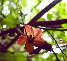 Hibiscus Flower in the Jungle by Shannon Kerr