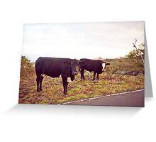 Cows! Greeting Card