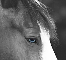 Beautiful Blue Eyes by Sherry Hallemeier