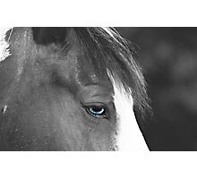 Beautiful Blue Eyes Photographic Print