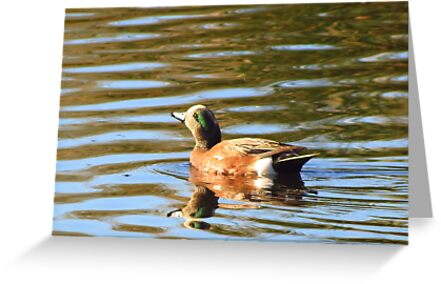 American Wigeon (Male) ~ Sunrise Seeker by Kimberly Chadwick