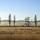 country morning by geophotographic