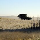 country tree by geophotographic
