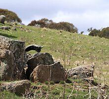 Mossy Granite Rocks by Kelly Walker