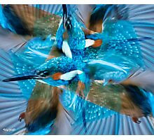 Designs Inspired By Nature: Kingfisher Flight Photographic Print