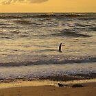 Golden Sunset by CollinScott