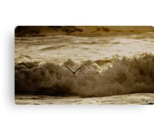 Bird Over Troubled Waters Canvas Print
