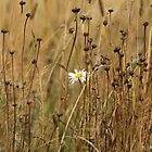 white flower on a yellow field by mrivserg