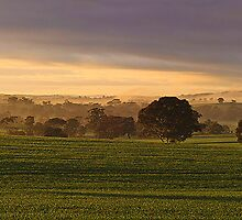 Clare Valley, South Australia by burrster