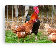Hahn Gockel Crow Colorful Poultry Hen Canvas Print
