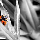 Little Red Lady Beetle by Kelly Walker