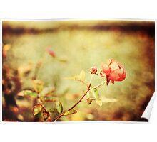 Little rose Poster