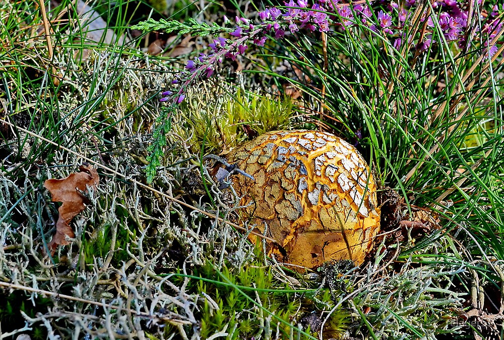 Earthball  by relayer51