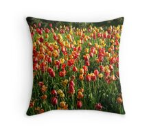 Tulip Field Tulips Tulpenbluete Flowers Throw Pillow