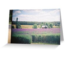 Lavender farm, Daylesford Greeting Card
