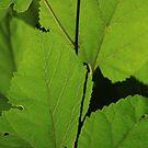 Leaves ~ by Renee Blake