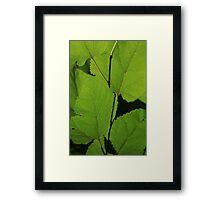 Leaves ~ Framed Print