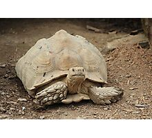 Tortoise at T & D's Cats Photographic Print