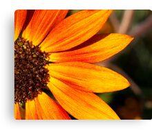 Orange Wild Sunflower Canvas Print