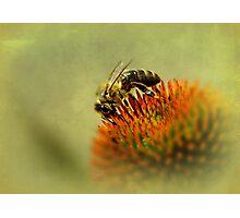 Bee mine.... Photographic Print