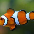 Clown Fishy by Judd3rman