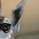 Giraffe by Judd3rman