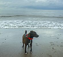 The Irish Sea Dog by Jamie  Green