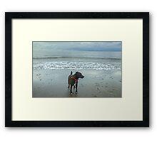 The Irish Sea Dog Framed Print