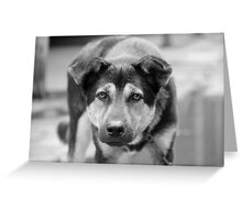 Colorless dog  Greeting Card