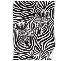 Zebra Couple Poster