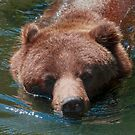 Grizzly Bear by Vac1