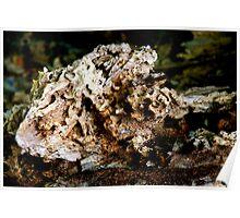 Termite Tree Trunk Poster