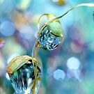 Rainbow Moss Drops by Sharon Johnstone