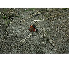 Butterfly Butterflies Insect Photographic Print