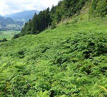 Allgäu Castle Hill Meadow Fern by justforyou