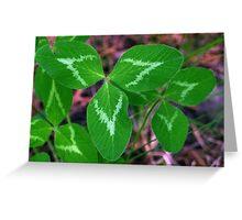 Cloverleaf Shamrocks Nature Greeting Card