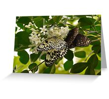 White Baumnymphe Small Baumnymphe Butterfly Greeting Card