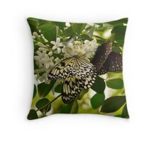 White Baumnymphe Small Baumnymphe Butterfly Throw Pillow