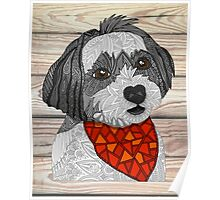 Max the Havanese Poster