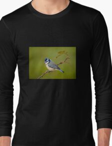 Blue tit, perched on rose branch Long Sleeve T-Shirt