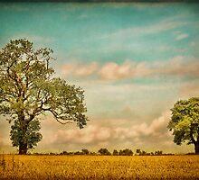 Farmland by Sharon Johnstone