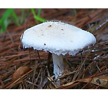 Pearl White Photographic Print