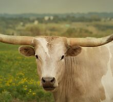 Portrait of a Longhorn II by kristijohnson