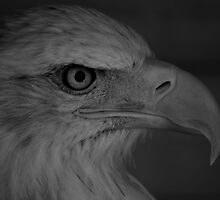 Eagle Eyes by James Taylor