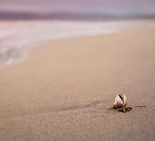A Seashell's Repose by Mariya Olshevska