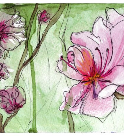 Apricot Blossoms - Pink Flowers in Watercolor Sticker