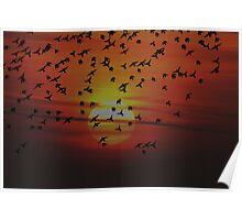 Sunset Starlings Poster