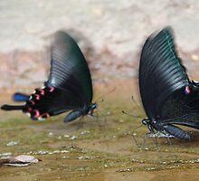butterfly by yossi rabinovich