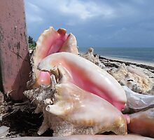 Pink shells.  by Anne Scantlebury