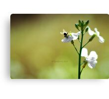 Bumble Bee Butt Canvas Print
